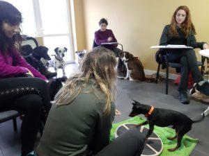 cursos actividades kireba perros