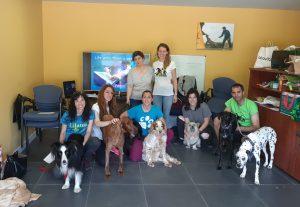 cursos actividadeskireba perros3