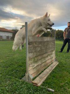 educacion canina donostia