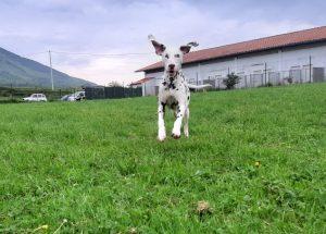 residencia canina10
