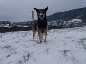 residencia canina6