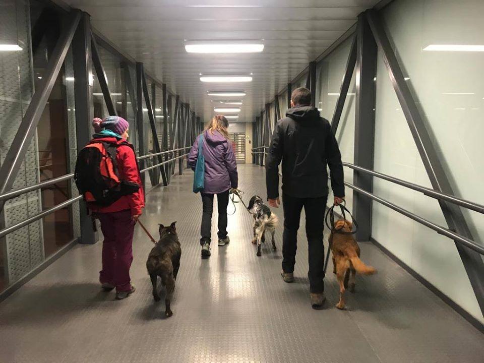 Evaluación de beneficios sobre los perros del Proyecto SIMBIOSIS+