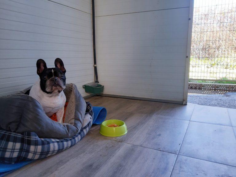 instalaciones hotel canino