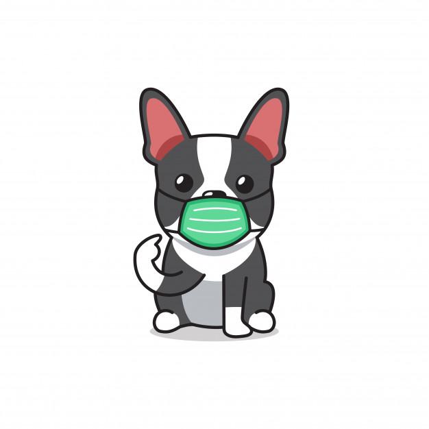 Prevención de la laringotraqueítis infecciosa canina